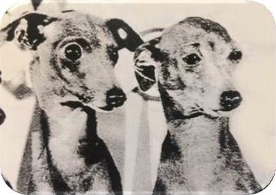 Pies po lewej ma bardzo ładny, okrągły kształt oczu o poprawnym rozmiarze. Pies po prawej ma zbyt małe oczy w kształcie migdałów, są one też lekko wyłupiaste.