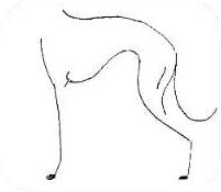 PRAWIDŁOWO Łagodna linia dolna w kształcie litery S i klatka piersiowa o idealnej głębokości.