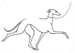 IDEALNY: sprężysty, elegancki chód z charakterystycznym unoszeniem i zgięciem nadgarstka, ale bez straty harmonijności i elastyczności.