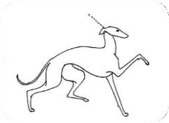 BŁĘDNY: przesadzony, tzw. chód konia dorożkarskiego. Bardzo często spowodowany jest złym prezentowaniem (lepiej jest pozwolić psu pokazać ruch na luźnej smyczy).