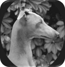 prawidłowa głowa psa